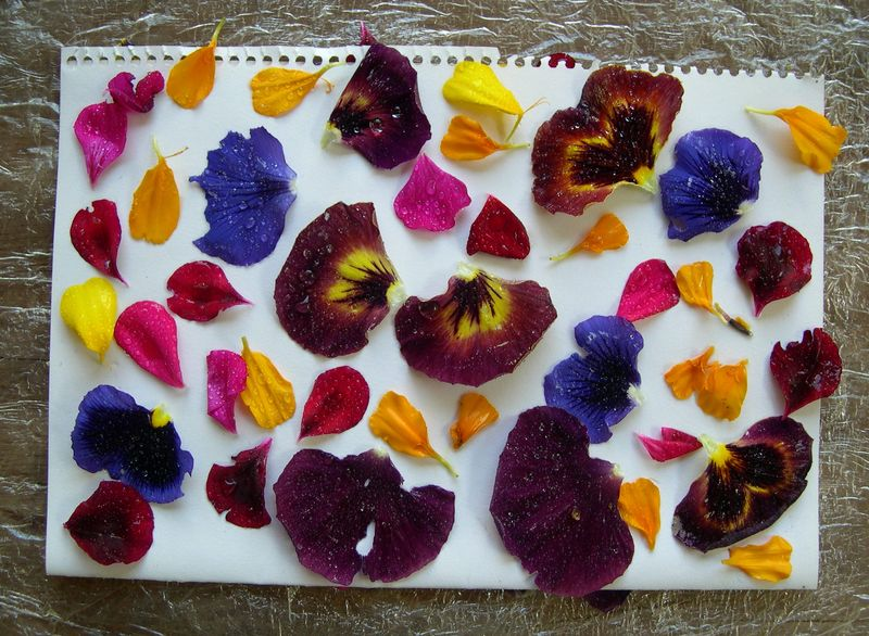 Eco-dyeing paper (6)